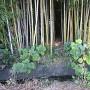 竹藪の中への入口