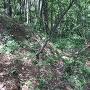 林大城の堀切