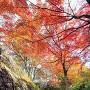 秋の登城道