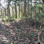 畝状竪堀(本郭西下)