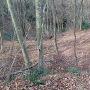 三の丸跡の畝状竪堀群 3