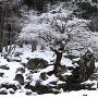 冬の一乗谷[提供:一般社団法人 朝倉氏遺跡保存協会]