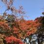 秋の津山城[提供:津山市観光協会]