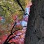 石垣と紅葉[提供:津山市観光協会]