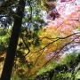 石垣を覆う紅葉