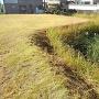 大手門左側の掘と土累
