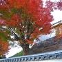 登城路の紅葉
