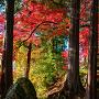 春日神社の社殿前の樹々