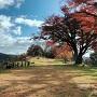 本丸跡の紅葉