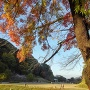 小牧山城の秋