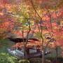 鳶魚閣と紅葉[提供:和歌山県観光連盟]