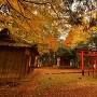稲荷神社(城址北東部土塁上)