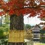 秋の衆楽園[提供:岡山県観光連盟]