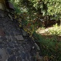 本丸と侍屋敷をつなぐ橋の下、空堀から望む諏訪曲輪