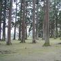 旧本丸跡の飫肥杉