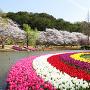 はままつフラワーパーク(桜とチューリップ)[提供:坂井市観光連盟]
