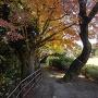 紅葉の土累の上を歩く