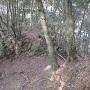 須賀神社(小の山)西側の堀切