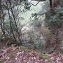眺望(北三ノ丸の崖下)