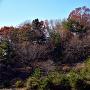 小松城跡 遠景