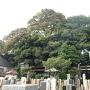 新井宿城全景