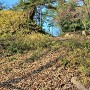 本丸土塁(東側)と石積