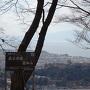 本丸跡から眺める彦根城