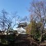 清海堀よりの岡崎城