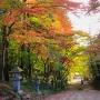 紅葉の胡宮神社参道