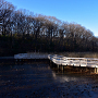 北本自然観察公園 八ッ橋の池
