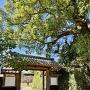 岡山神社の前にある門と石垣