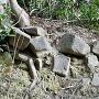 石組み跡?