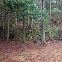 園林寺跡地