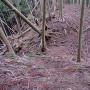 西尾根の堀切2