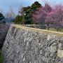 梅林と高石垣