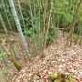 宗鏡寺砦堀切横の竪土塁