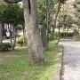 御殿山公園 城址風景