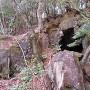 内藤法雲郭(烏嶽)南側曲輪下の洞窟