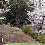 桜と物見櫓跡