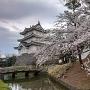 御三階櫓と満開の桜②
