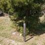 登城口に有る陸軍歩兵碑
