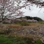 守谷沼からの城祉遠景