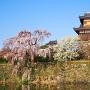 早咲きの枝垂れ桜と両櫓