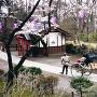 春の懐古射院前と人力車[提供:一般社団法人こもろ観光局]