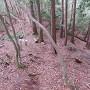 琴滝ルートへの分岐