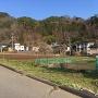 麓の原畑館から笹洞城を見上げる