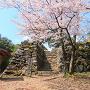 ソメイヨシノと、本丸跡突出部の石垣