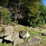 西曲輪跡にて天守台と本丸の石垣積石