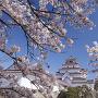 桜咲く鶴ヶ城[提供:CHOCOMAMA / Adobe Stock]