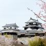 桜の風景[提供:Yoshinori Okada / Adobe Stock]